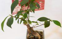 アンティーク雑貨 ミニ観葉植物